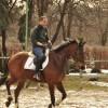 Продава се кобила – Патриша