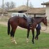 продавам кон