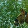 Продавам супер кон за езда