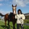 Породиста кобила, отлично състояние