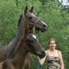 Aхалтекински коне за прoдажба