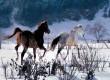 Езда в снега