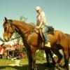 Продавам кон. Тежковоз. 2700 лв