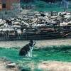 продава се кобила на пет години  порода руски тежковоз