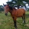 Продавам кобила