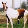 Красива кобила за езда и спорт