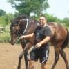 Продавам Чистокръвна английска кобила