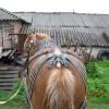 НЕЛИНА – кобила