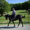 Продавам кобила Дунавска порода