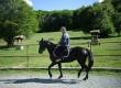Продавам кобила Дунавка