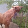 Хановер кон
