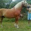 мъжки кон