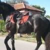 Продавам кобила.