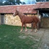 кобилата е в перфекно състояние