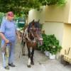 Продавам каракачански кон