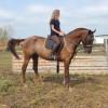 Продавам Спортна кобила