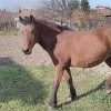 Здрава работна кобила – много послушна