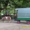продавам пони с каубойска каручка и седло