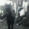 Продава се спешно кобила