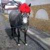 Продавам кобила!!!