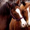 Предлага работа за инструктор на коне