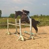 Продавам български спортен кон