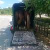 Каравана за коне