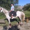 Продавам чистокръвни арабски коне