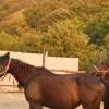 Приказна кобила