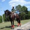 Продавам спортен кон