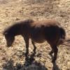 Женско пони на 9 месеца