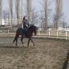 Кастрат 6 год. за любителска езда
