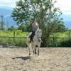 Продавам кобила Мимоза